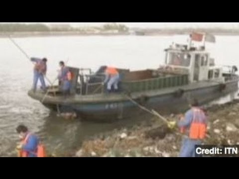 Dead Pigs Found Floating in Chinese Water Supply
