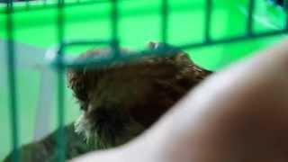 Śmierć ptaka - ten wróbelek cierpiał 2 dni zanim umarł. Gdy widzisz zwierzęta na drodze zwolnij.