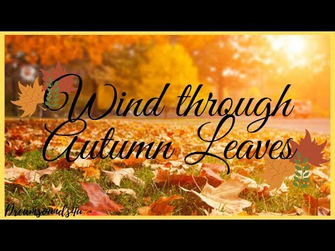 Nature Sounds: Falling Autumn Leaves In The Wind
