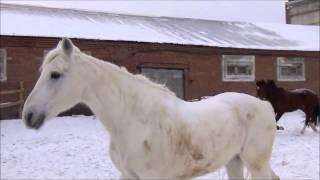 конный клуб Кураж, г.Красноярск