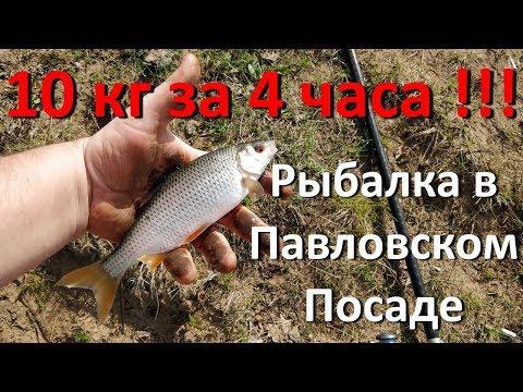 Рыбалка в Павловском Посаде 2018 Саурово