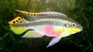 Рыба для пруда на даче. Несколько советов(Пруд для разведения рыбы. Вы хотите создать на приусадебном участке пруд с растениями, в котором наряду..., 2014-08-09T14:30:20.000Z)