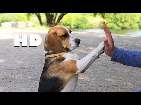 Every Dog Lover Must Watch - AMAZING DOG TRICKS (HD)