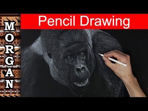 Colored pencil Techniques - drawing a Gorilla