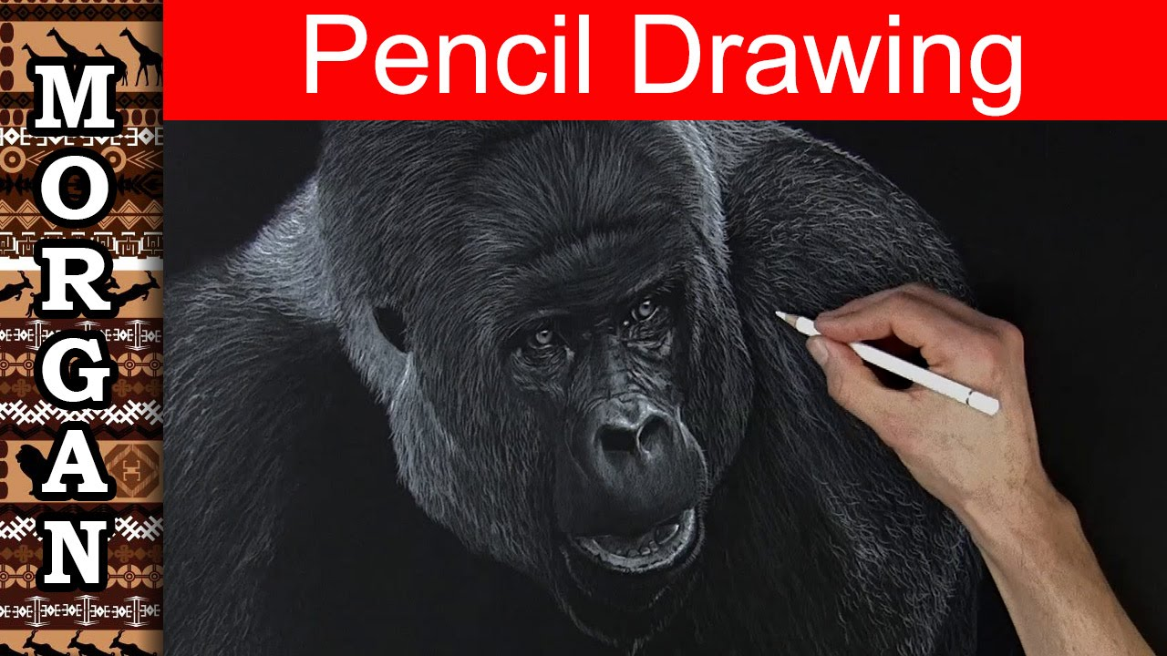 Colored pencil techniques drawing a gorilla youtube