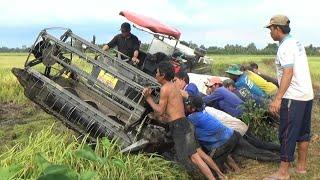 Máy cắt lúa mà gặp phải cảnh này thì điều phải quì lại