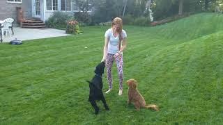 Dog Trick Duo! Hilarious!!