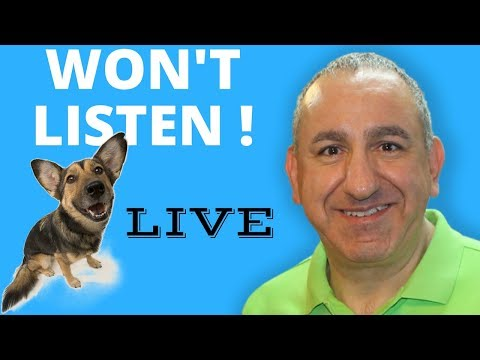 Why Your Dog Doesn't Listen To You. In depth understanding of your dog...