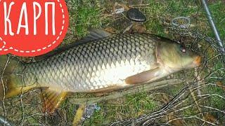 Почему на платниках плохо клюёт рыба мелкая