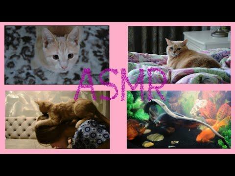 АСМР - Домашние питомцы   котики   рыбы дерутся   ASMR Pets