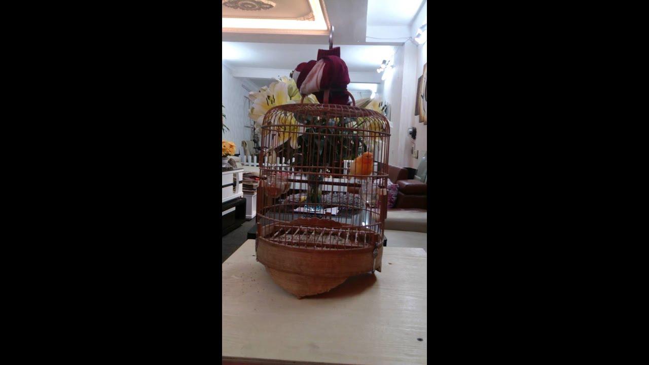 Địa Chỉ Bán Chim Yến Tại Hà Nội Thuần Hót Giá Rẻ Nhất Trên Thị Trường Hà Nội. LH: Chung 037.539.1246