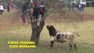 Encierro Campo Malacuera 2019