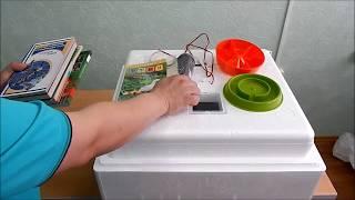 видео Где купить качественный инкубатор по доступной цене?