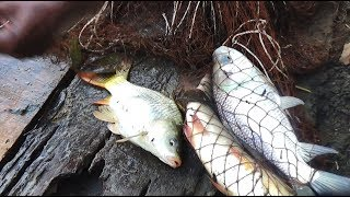Net Fishing | Catching Big Fish With Cast Net | Net Fishing in the village (Part-239)