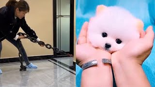 baby dogs | funny puppies and cute puppy videos compilation #shorts