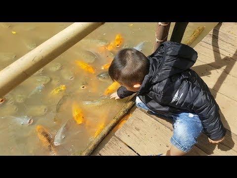 Trò Chơi Bé Cho Cá Ăn ❤ ChiChi ToysReview TV ❤ Đồ Chơi Bài Hát Baby Doli Fish Song