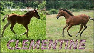 my awesome foal -  Cute baby foal - Meet Clementine