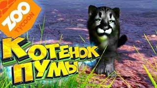Чёрный КОТЕНОК ПУМЫ - Прохождение #3 - ZOO Tycoon