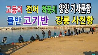 양양 기사문항/강릉 사천항/고등어,전어 낚시/바다원투낚…