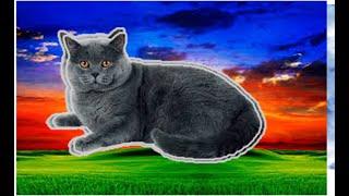 Зубной налёт    и   зубной камень   у    кота