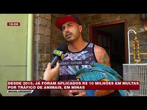 BRASIL URGENTE MINAS 13/07/2018