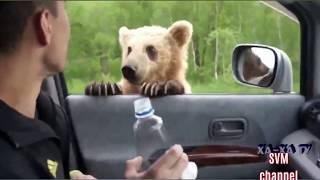 Man shooting hungry wild bears
