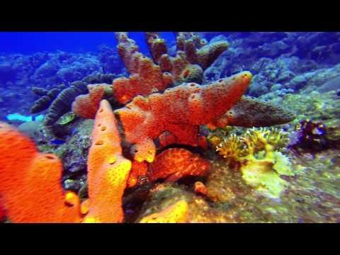 2017 03 19 Guad Dive YT