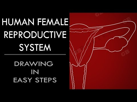 How to draw Female Reproductive System in easy steps : Biology : CBSE 10th Science