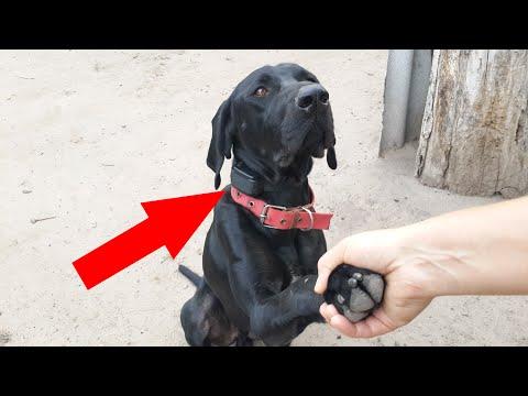 Ошейники для собак, поводки, намордники и прочая амуниция