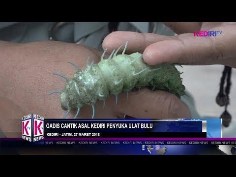 GADIS CANTIK ASAL KEDIRI PENYUKA ULAT BULU