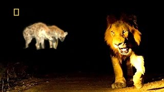 SAVUTI'S  WILD PREDATORS ✧ HD NATIONAL GEOGRAPHIC DOCUMENTARY ✧ Lions, Hyenas & Leopards
