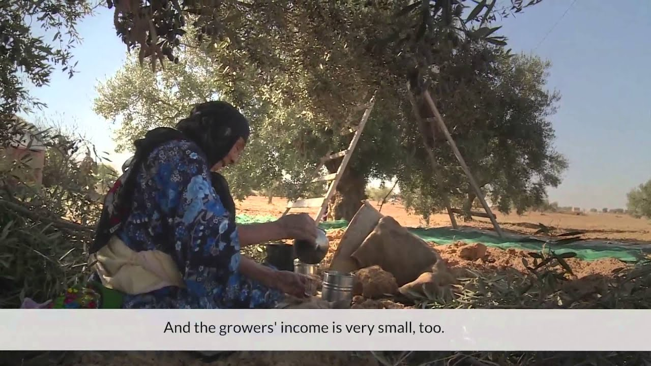 Growing Tunisia's Olive Industry
