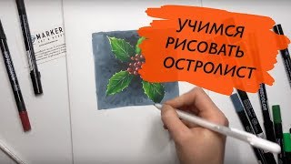 Уроки ботаники - рисуем остролист спиртовыми маркерами ZIG Kuretake