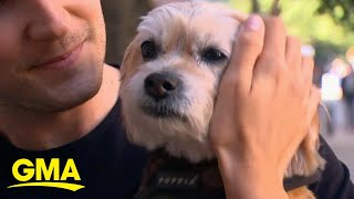 Hollywood actress helps in the case of a missing dog stolen by dog walker l GMA