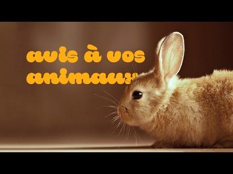 Garde-animaux-metz.fr (version Courte)