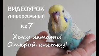 """Учим попугая говорить. Урок 7: """"Хочу летать! Открой клетку!"""""""