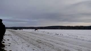 #Конные скачки #2018 #Кушва #забег #тройки #17.02.2018