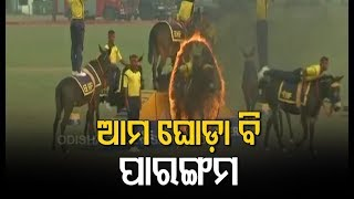 Horse Riding Stunts By Eastern Command In Military Tattoo Show, Kolkata