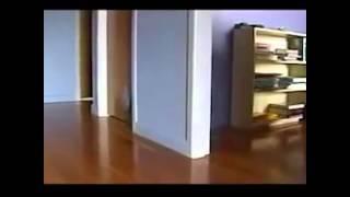 Кошки бегают по квартире (дрифт) / Cats running around the apartment