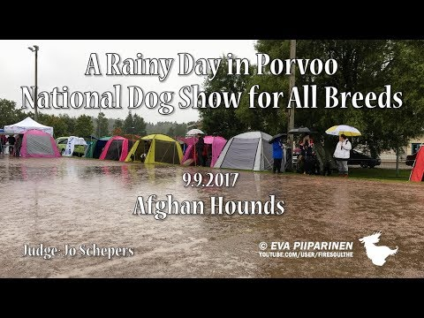 Porvoo National All Breed Dog Show ♥ Afghan Hounds
