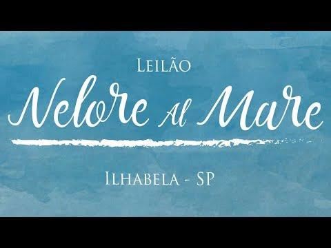 13 (BellaMare OuroFino - OURO 2905)