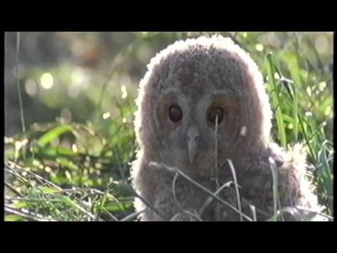 Five Owl Farm film