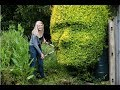 This Mother Lops Garden Bushes Into The Shape Of Her Son's Face