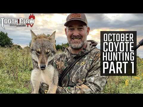 October Coyote Hunting Part 1
