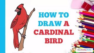 How to Draw a Cardinal Bird in a Few Easy Steps: Drawing Tutorial for Kids and Beginners