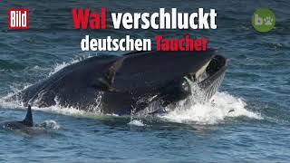 Taucher von Wal verschluckt!