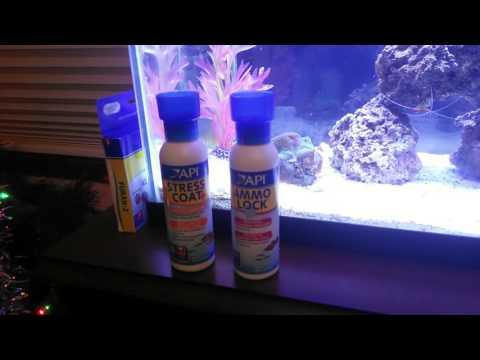 How To Treat Sick Fish In A 5 Gallon Bucket, Furan 2