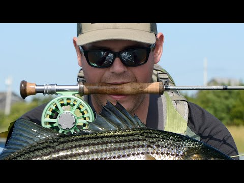 Striped Bass Fly Fishing On Long Island