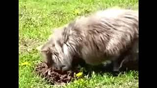 Кот нас...л на голову кроту. Смешные короткие видео про животных и хозяев