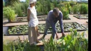 Водный сад - Служба Спасения Сада(Водный сад - Служба Спасения Сада (телеканал